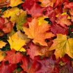 intromisiones otoño ilegitimas
